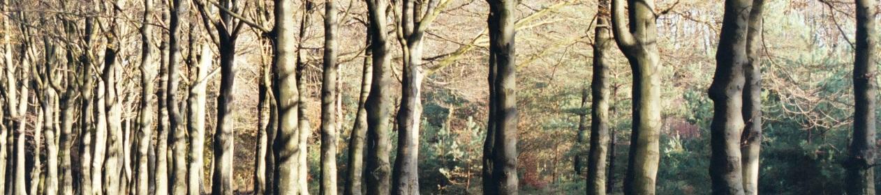 veluwe titel bomen